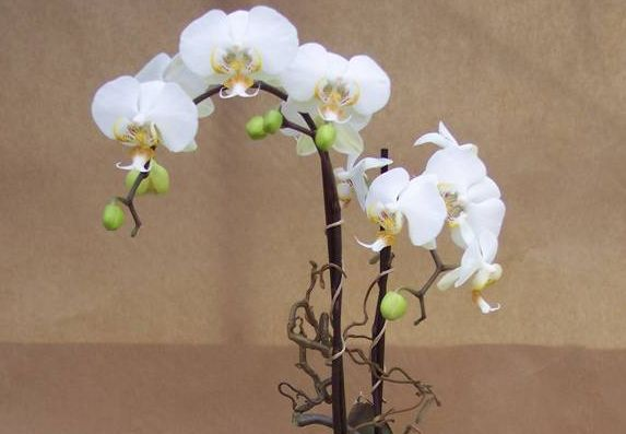 7 rose kurf rstendamm und orchidee kurf rstin. Black Bedroom Furniture Sets. Home Design Ideas