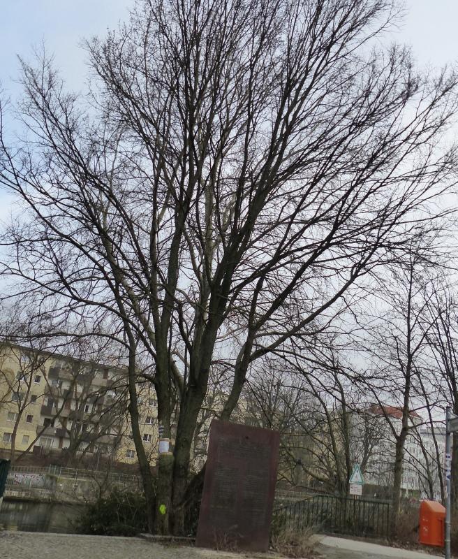 Bedeutung Der Markierungen An Den Bäumen Entlang Des
