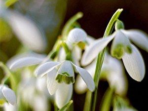 Tulpen Richtig Anschneiden : fr hlingsblumen in der wohnung hyazinthen narzissen co ~ Lizthompson.info Haus und Dekorationen