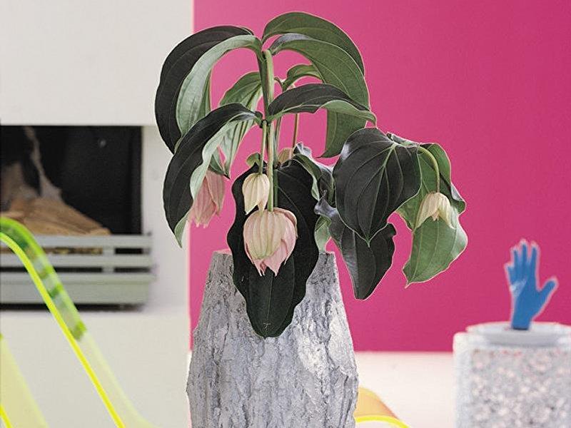 Zimmerpflanzen achtung winterpause - Zimmerpflanzen berlin ...