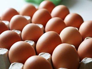 Eier Einfrieren So Gehts Berlinde