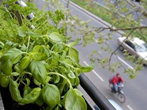 Gemuse Und Obst Fur Den Balkon Berlin De