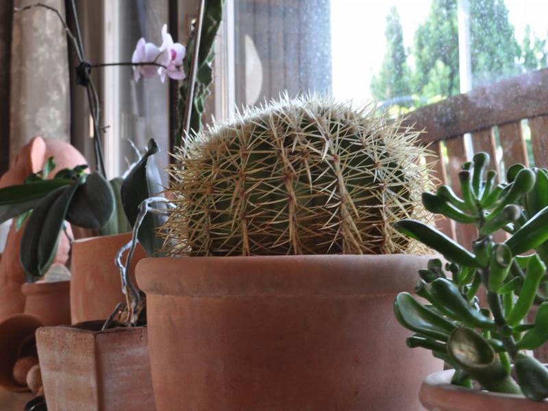 Zimmerpflanzen so findet man den richtigen topf - Zimmerpflanzen berlin ...