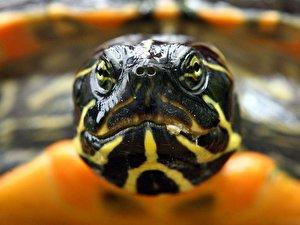 Kleiner Kühlschrank Für Schildkröten : Schildkrötenbabys brauchen intensive pflege u2013 berlin.de