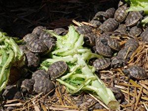Kleiner Kühlschrank Für Schildkröten : Schildkrötenbabys brauchen intensive pflege u berlin