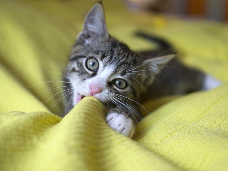 Katzenbabys Was Die Kleinen Zum Groß Werden Brauchen Berlinde