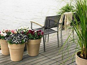 winter auf dem balkon robuste pflanzen f r den blumenkasten. Black Bedroom Furniture Sets. Home Design Ideas