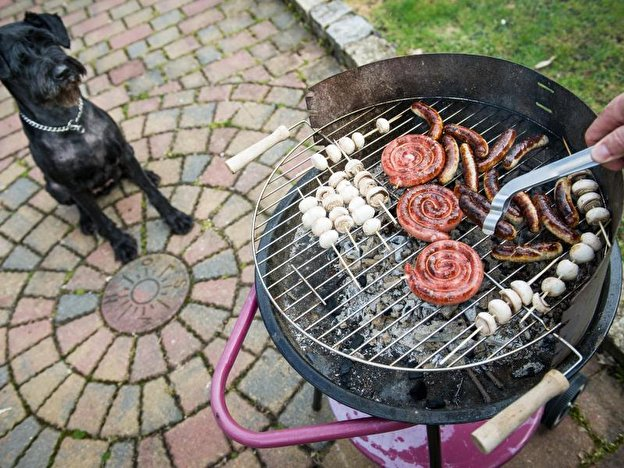 Hund bettelt am Grill