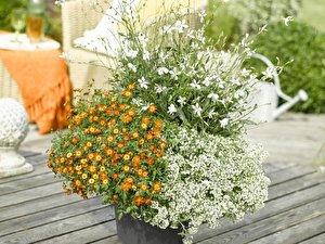 Weisse Blumen Kombinieren Drei Ideen Fur Den Balkon Berlin De