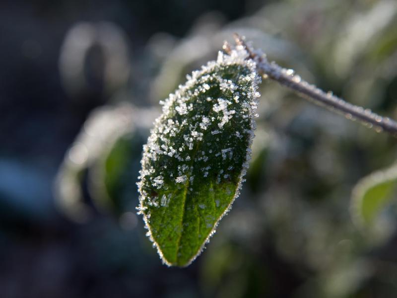K lteeinbruch empfindliche pflanzen brauchen schutz for Berlin pflanzen