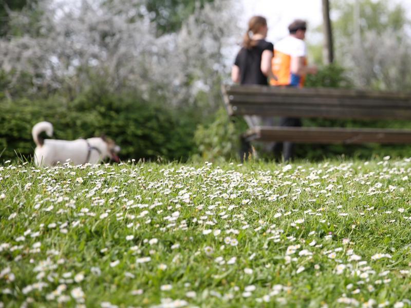 Buscopan zäpfchen hund dosierung