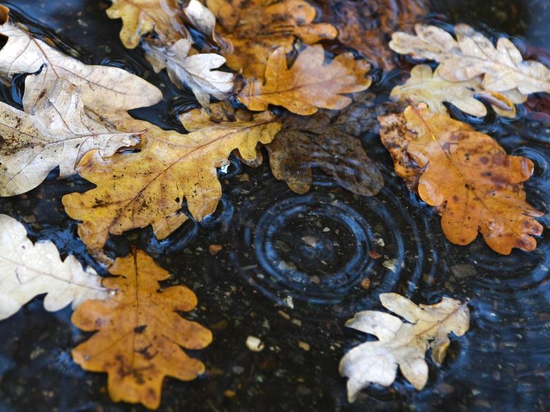 Gartenabfälle Verbrennen Brandenburg