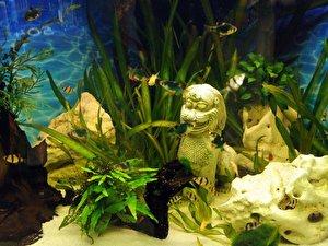 aquarium zu viel futter l sst algen wuchern. Black Bedroom Furniture Sets. Home Design Ideas