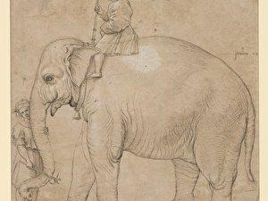 Raffael (Schule), Der Elefant Hanno
