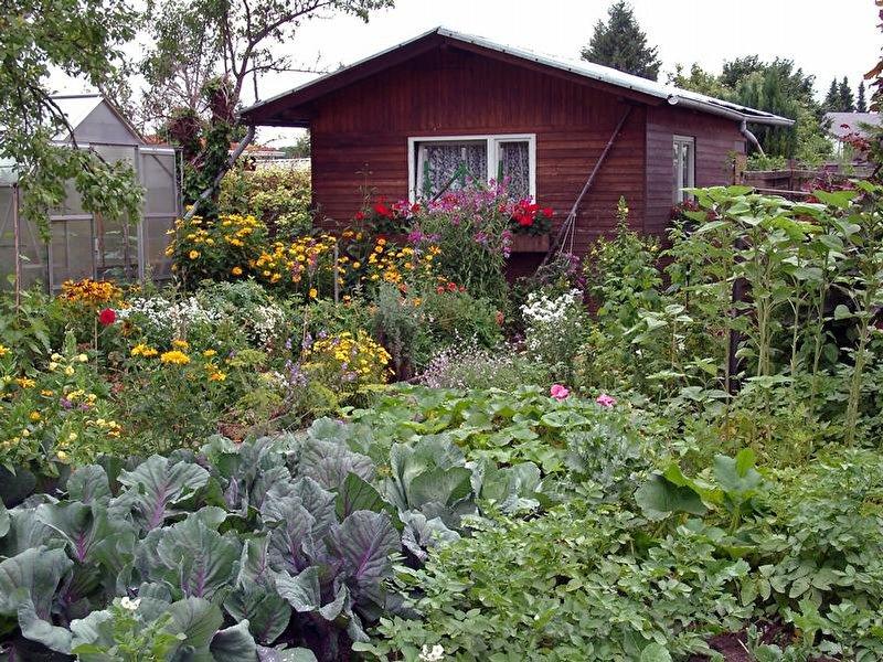kleingarten wie man einen bekommt und was dort pflicht ist. Black Bedroom Furniture Sets. Home Design Ideas
