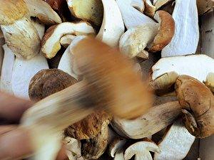 wann sind pilze schlecht