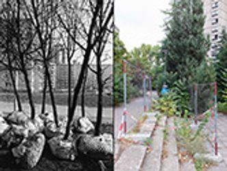 Bildvergrößerung: Der Ernst-Thälmann-Park
