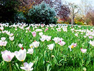 Bildvergrößerung: Frühlingsimpressionen