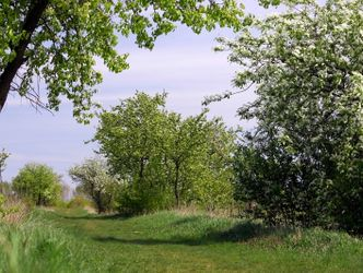 Enlarge photo: Fruit trees in flower in Blankenfelde