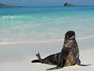 Bildvergrößerung: Robbe am Strand